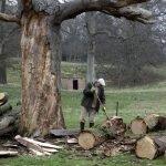 Preparing the oak