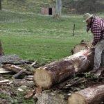 Jason stripping bark