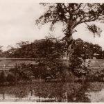Barking Hall Meadows